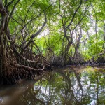 Sri Lanka to be first nation in the world to protect all its mangroves