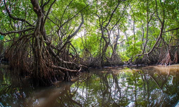 national plan mangrove forest sri lanka protection
