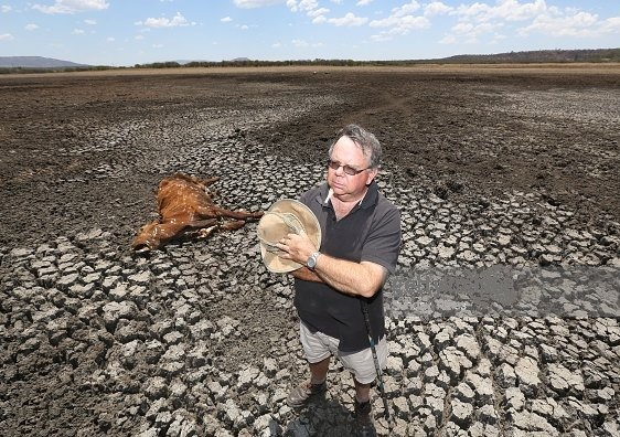 cattle farm drought farm climate change eastern cape