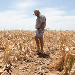 Farmers seek aid as SA weathers worst drought in 24 years