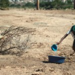 Drought relief: animal feed urgently needed in Free State