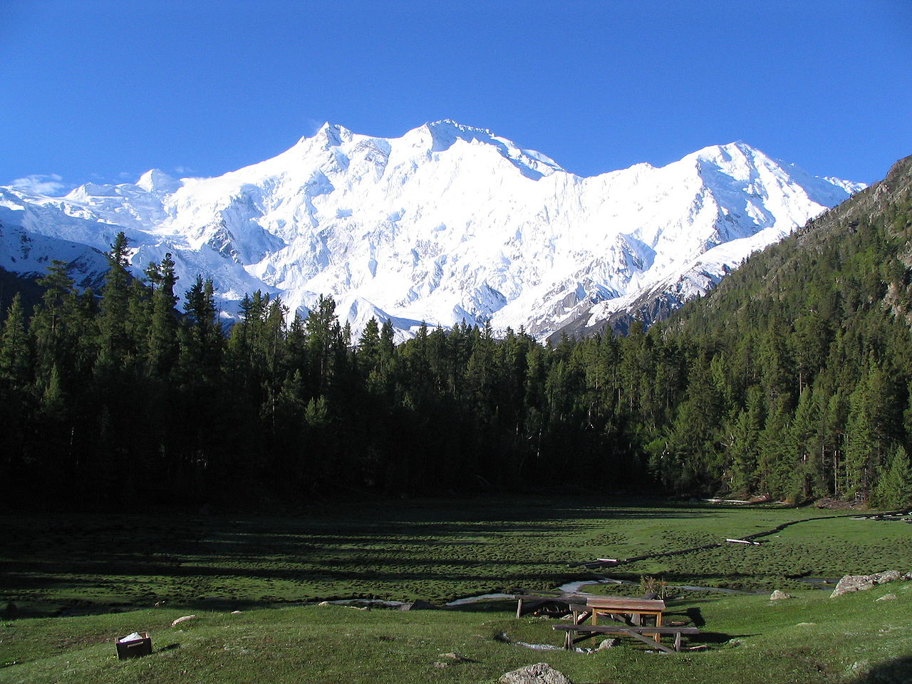 Nanga Parbat Fairy Meadows Pakistan forest clearing1