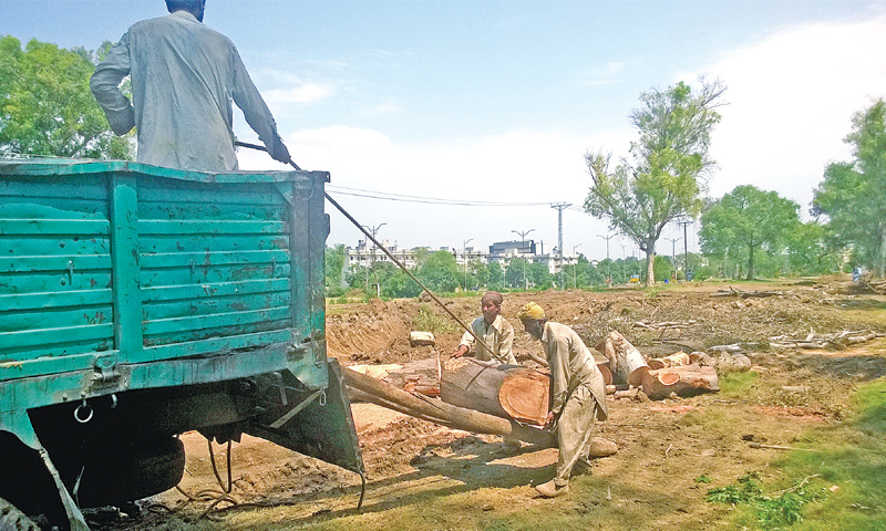 Pakistan forest clearing tree felling train