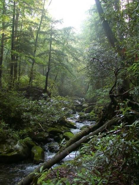 Knysna forest Nature Valley Tsitsikamma Garden Route world forest day2