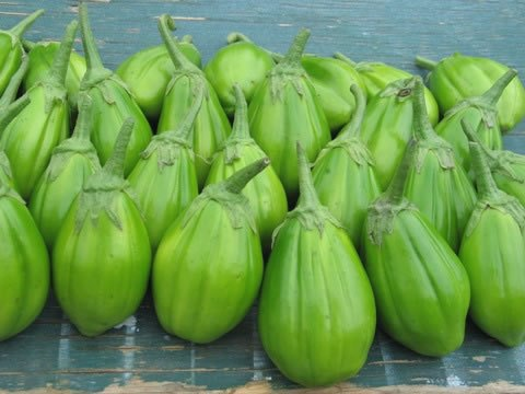 aubergines-african-eggplant-indigenous_crop_green_times