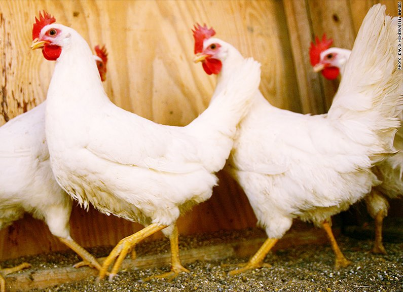 chicken america south africa trade import arsenic dumping food