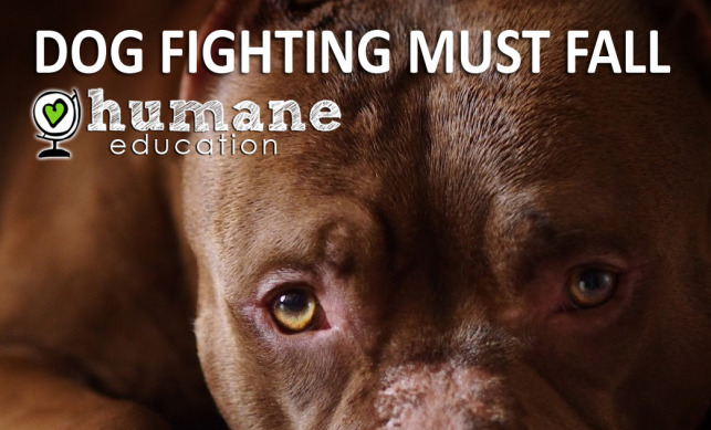 dog fighting must fall cape town green times animal welfare cruelty
