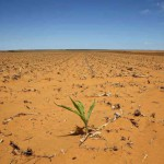 SA to ease strict GM crop rules to avert food crisis