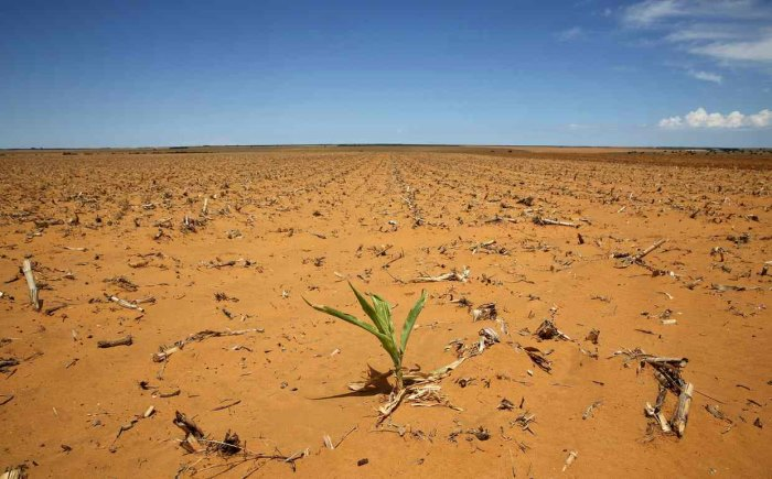drought south africa maize hoopstad gmo