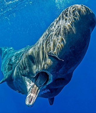 plastic sperm whale stomach dead ocean pollution waste2