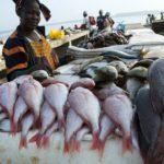 Fish as serial migrators know no borders