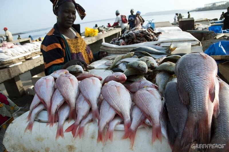 west african fisheries threatened danger green times