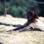 Ethical Coffee Part 1: How to drink a cuppa that matters