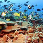 Add your support to the largest marine protection zone ever