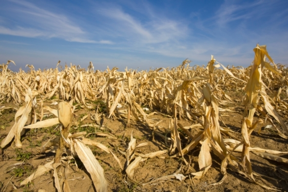 extreme-weather-may-raise-toxin-levels-in-food-scientists-warn