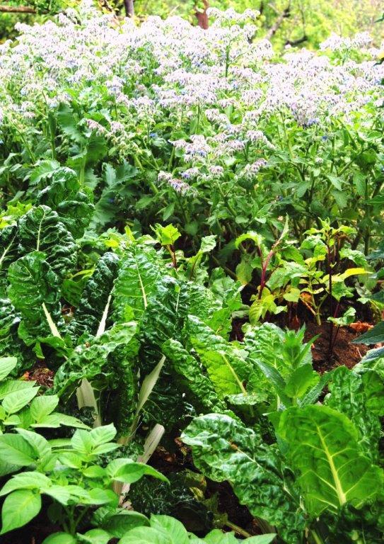 sustainable gardening composting food gardens (2)