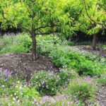 Sustainable Food Gardening Part 2: Composting for food gardens