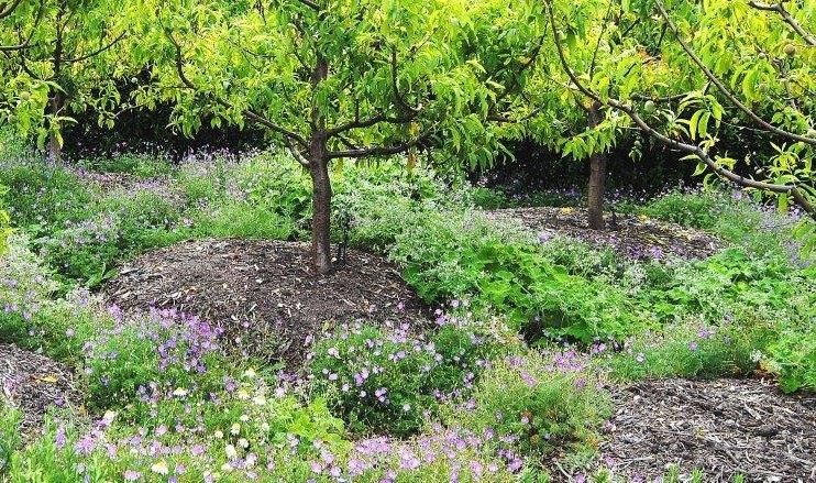 sustainable gardening composting food gardens (4)