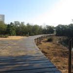 Milk bottles into walkways to protect crucial KZN mangrove beaches