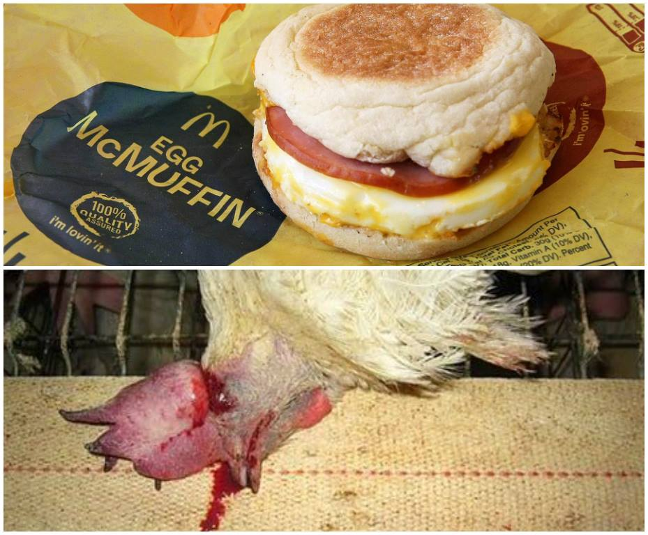 Egg McMuffin meal McDonalds cage-free hens eggs2