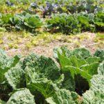 Food Gardening part 3: Planning a food garden