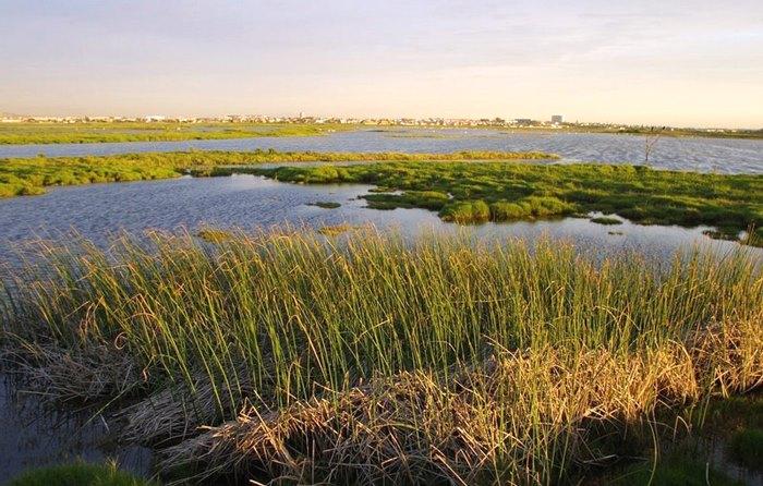 Rietvlei_wetland_reserve_-_Cape_Town_2