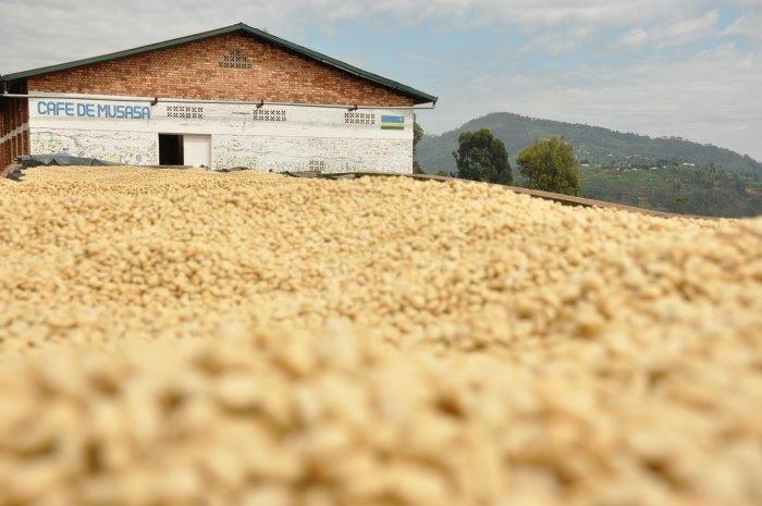 bean-there-coffee-company-rwanda-2