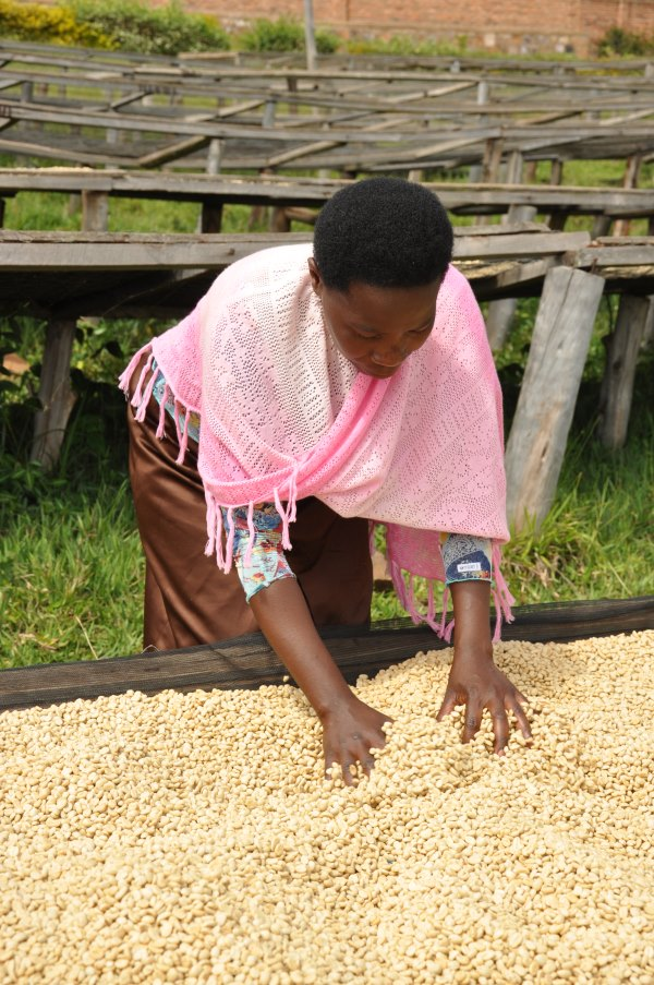 bean-there-coffee-company-rwanda-3