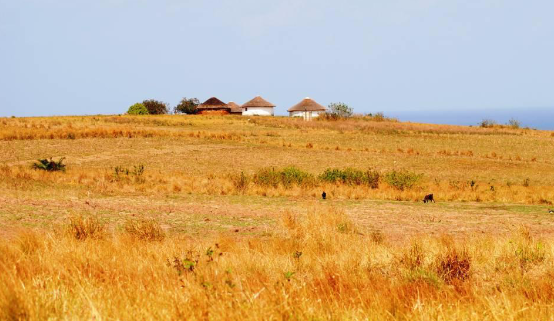 traditional-umzi-and-fields-near-mtentu-sustaining-the-wild-coast