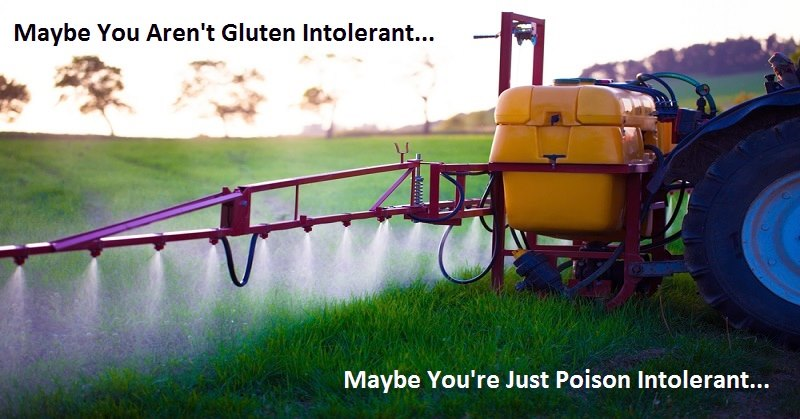 gluten poison roundup pesticide wheat us