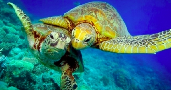 turtles ocean protection 30 percent 2030 avaaz