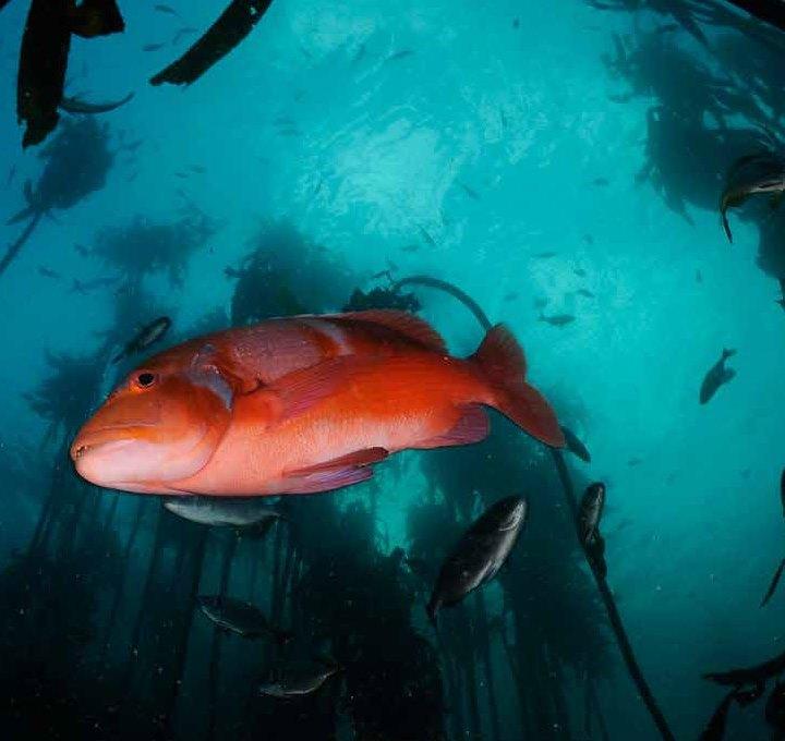 wwf_oceans_facts_futures_economy_report3b