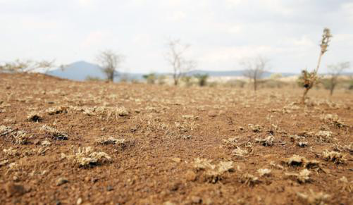 drought-climate-change-disaster-farming-western-cape