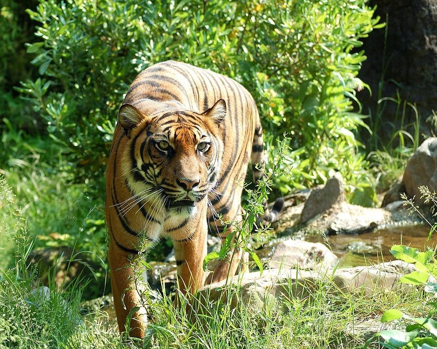jane-goodall-save-wildlife-end-trafficking