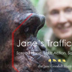 Jane's Traffic Stop: the fight to end illegal wildlife trafficking