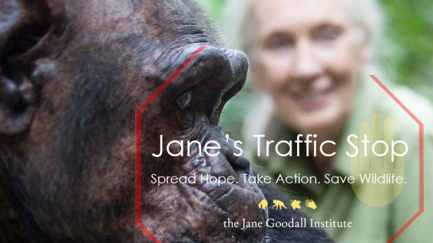 jane-goodall-save-wildlife-end-trafficking4