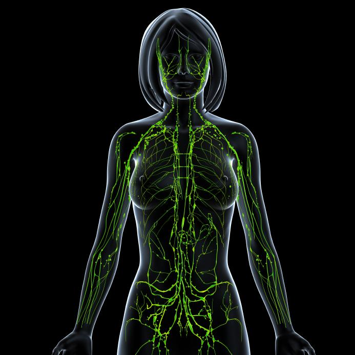 lymphatic-system-female-treatments-breast-cancer-prevention