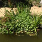 My natuurlike swembadstorie – Simple pool conversion via floating island