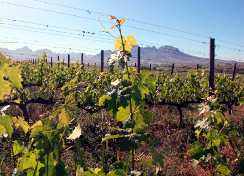 spier-wine-farm-carbon-trade-mitigation-climate-change2