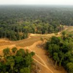 Palm oil plantations wreaking havoc on Africa's forests