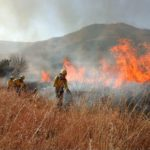 Lack of invasive plant management compounds Somerset West fires