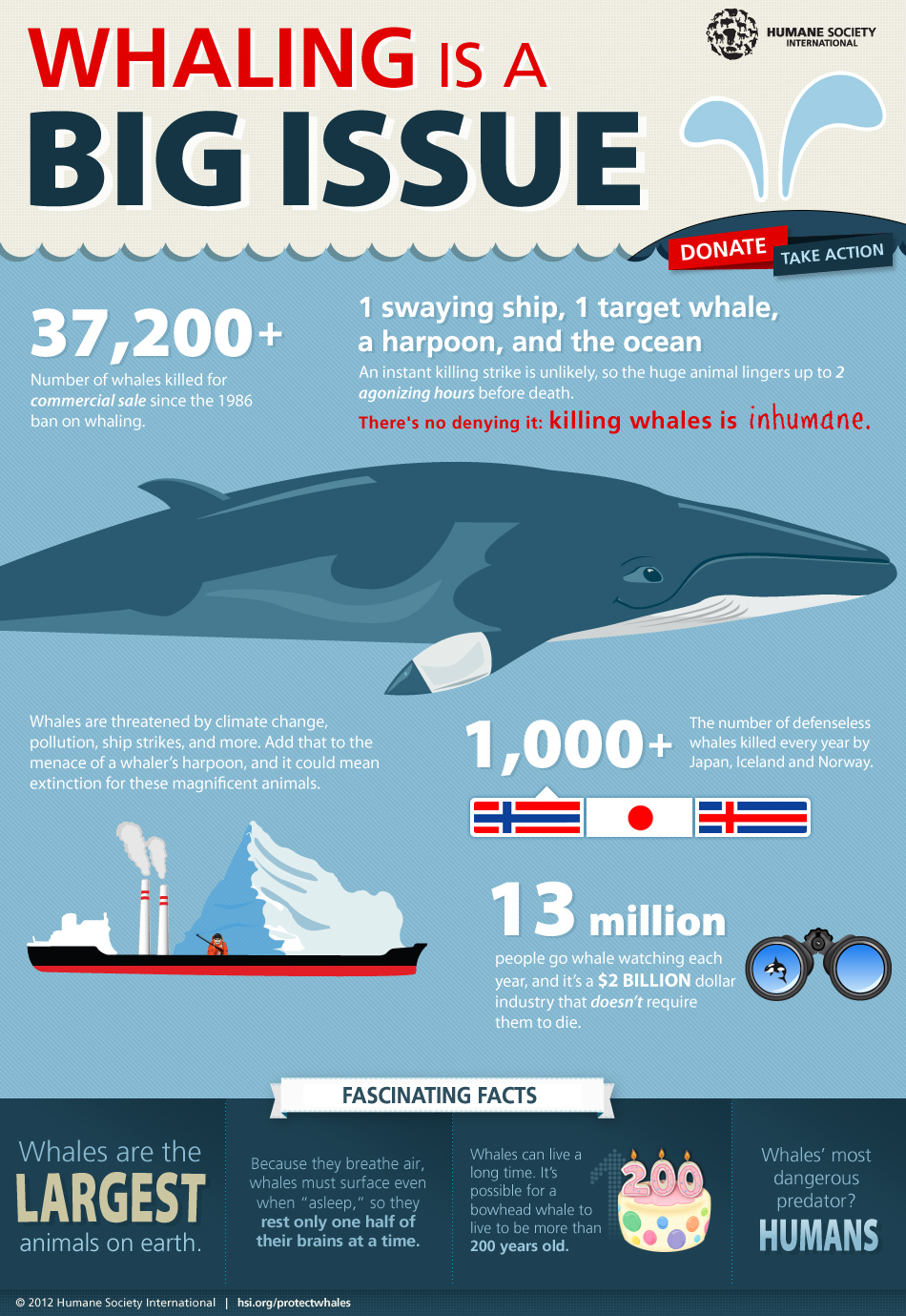 the whaling and whale watching industry tourism essay The importance of whale-watching to the tourism economy has been recog- nised by iceland's leading tourism body, the icelandic tourism industry associ- ation, which has stated: 'whale-watching has become one of the most popular.
