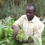 "ZNFU: ""Zero rate agriculture needed to make Zambia breadbasket"""