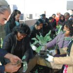 Rooftop garden plants seeds of success
