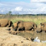 Kruger National Park to combat rhino poaching with new regional court