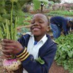 A look at SA's budding green economy