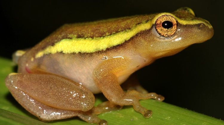 Plans afoot to save critically endangered KZN frogs