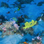 Brazil rejects oil company's 'Amazon Reef' drilling bid