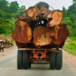 Ghana environmentalists demand long-overdue forest protection
