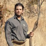 Elephant trophies to be allowed back into the US